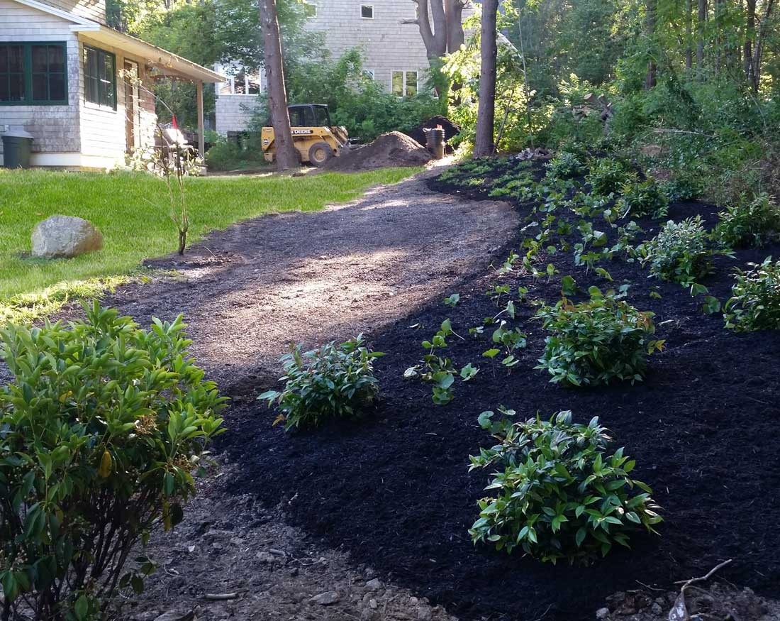 native ground cover and shrubs to create natural transition from lawn to woods