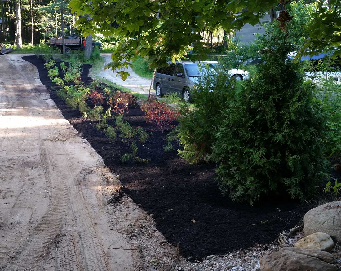 Native plants installed on Peaks Island